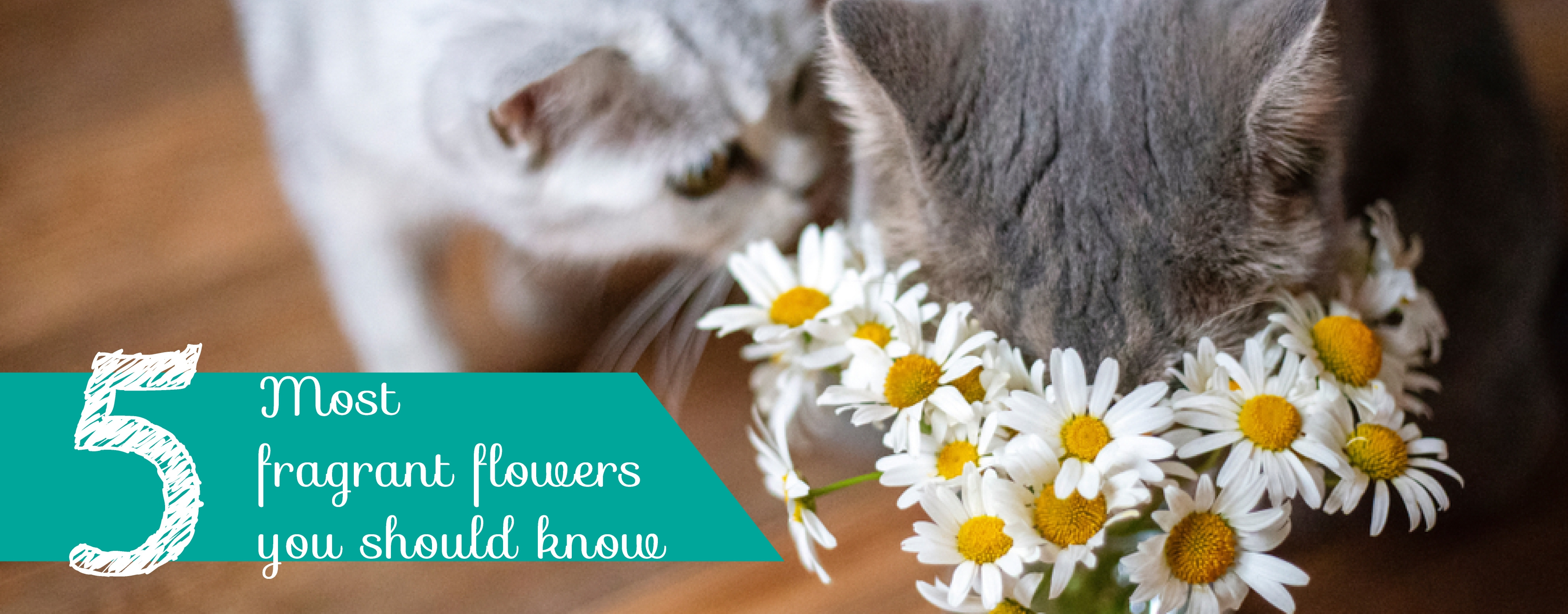 H5 most fragrant flowers you should know