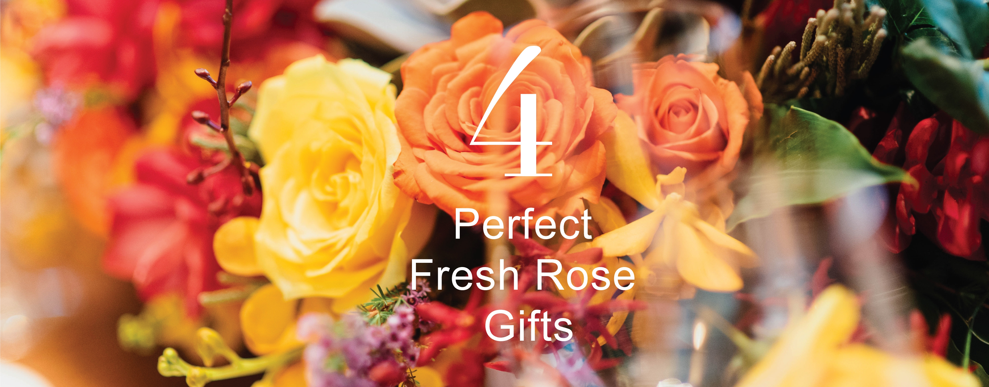 H4 Perfect Fresh Rose Gifts