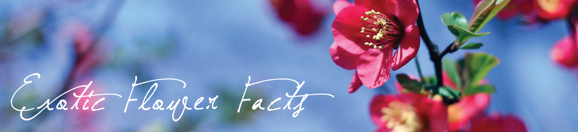 H7 Exotic Flower Facts That Will Amaze You