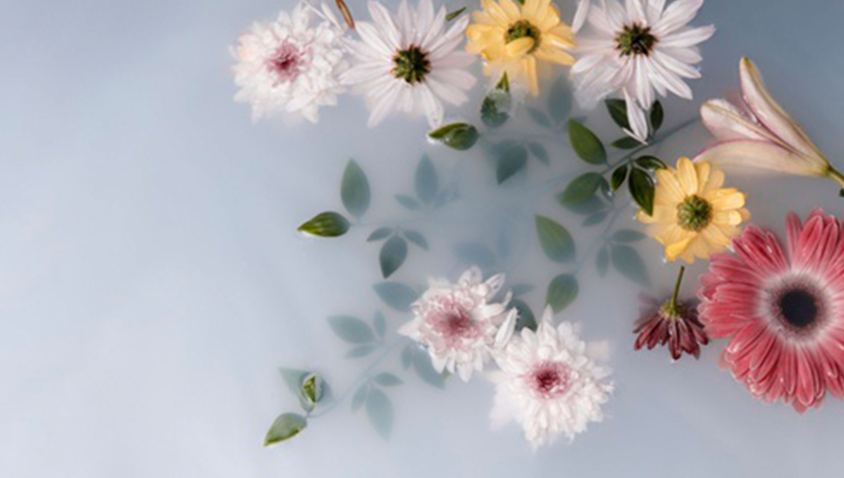 HHow to Preserve Flowers for Longer