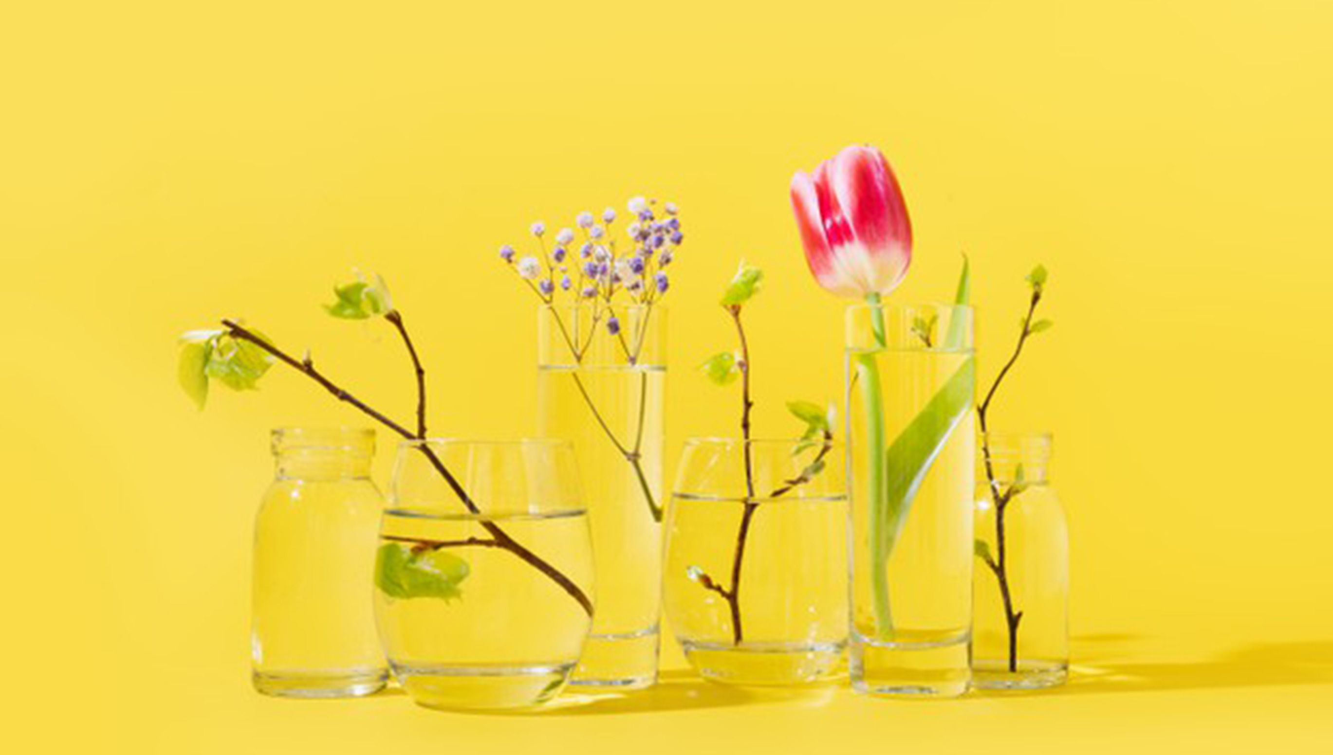 HHow to Take Care of Flowers in Room Temperature