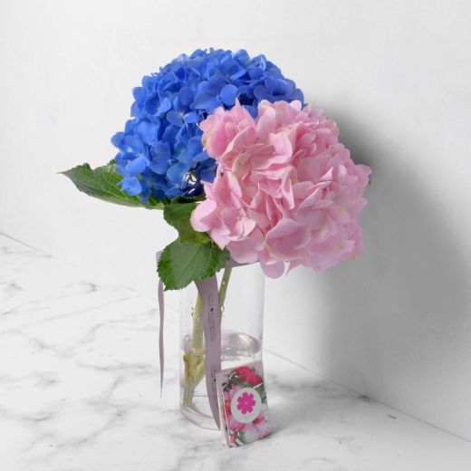 MIXED HYDRANGEAS WITH VASE FOR VALENTINE'S DAY